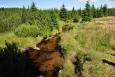Krásný potok ve slati Malé Krásné louky.