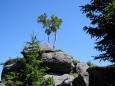 I stromky chtějí mít výhled do kraje. Polední skály