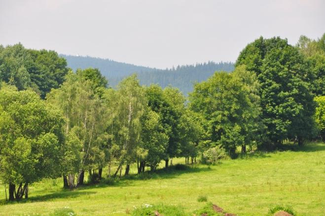 Pastviny u Koryta a na obzoru bílá věž rozhledny na Libínu.