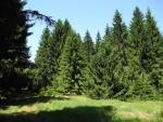 Jdeme příjemnou lesní cestou kolem bývalé signálky k vrchu Kozí stráň.