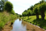 Potok lemovaný vrbami.