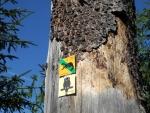 Značek je kolem Finsterau opravdu mnoho a chodit lze prakticky po jakékoli cestě. Výjimku tvoří omezení od 15.11. do 15.7. na některých, většinou ale turisticky neoznačených cestách. Jaký je to rozdíl v přístupu NP Bavorský les a NP Šumava pozná hned každý, kdo sem zavítá.