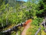 Vedry letošního léta trpí i rostliny. Takto rezavě se zbarvilo borůvčí, které na kamenech nesehnalo dostatek vláhy.