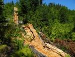 V horní části nás již nechrání stín stromů. Kůrovcová kalamita vzešla právě z tohoto území a zdejší lesy vzaly za své jako první. Dnes již jsou vidět nálety pionýrských dřevin, keře i smrčky. Po 15 letech se les pomalu vrací v pozměněné podobě.