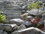 Kamenné schody umožňují snazší průstup mořem obrovitých balvanů Luzného, který je díky nim asi nejzvláštnějším vrcholem celé Šumavy. Tato stezka vede od hranice, která se zde ze směru od Mokrůvek prudce lomí doprava. Celé území Modravského potoka, který zde pramení, je tak vystrčeno ostrým břitem meče do hlouby Bavorska. V devadesátých letech se zde po upraveném chodníčku krásně putovalo.
