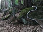 Had nešel přehlédnout ani v nastupujícím šeru. Naštěstí na nás nezaútočil.