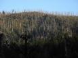 První ranní pohled při krátkém sestupu k Roklanskému jezeru patří ježatému a ještě neučesanému Roklanu.