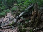 Les je značně poničen. Přírodním výběrem prošly především bučiny.