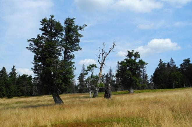 Jsme nedaleko od našich hranic. Lesy se budou střídat s loukami, na kterých dožívají staré soliterní stromy. Jde o zajímavá a krásná místa.