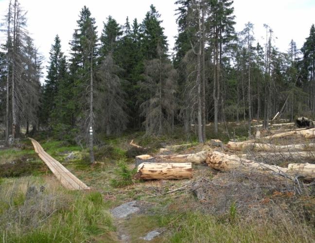 Že i v NP Bavorský les existují výjimky, když jde o les, je jasně vidět na vice místech.