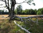 Kohlschachten je další z mýtin uprostřed lesů.