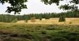 Bývalé Suché studánky s prameništěm Jelenky jsou přírodní rezervací Městištské rokle, která má sklon 20–40°, tvoří kaskády, peřeje a malé vodopády. Na březích rostou malé pryskyřníky platanolisté
