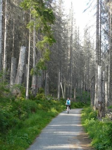 Cesta k prameni je smutná, stejně tak celé okolí pramene.