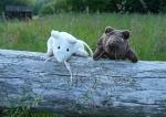 Naše myši