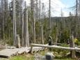 Samotné okolí pramene již zarůstá novým mladým lesem (foceno začátkem května).