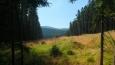 pohled průsekem na hřeben Orlických hor zvaný Vápenka ...