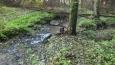 museli jsme přebrodit několik potoků - tenhle byl Všehrdský ...