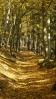 cesta v Hlineckém lese ...