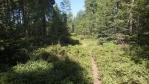 úvodní stoupání a trosku džungli vystřídala pěšinka a borůvky ...