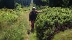 tak by měli všude růst borůvky ....