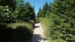 tahle stezka vede na nejvyšší vrchol Orlických hor - Velkou Deštnou 1115 mnm ...