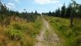 dost jsme se divili, že značná část naší cesty najednou vedla kosodřevinou ...