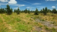 experiment se moc nepovedl, kosodřevina se začala hodně rozrůstat a likvidovat zbytky původního horského lesa,no a teď se rod Kolowratů, kterému opět lesy patří, snaží za vynaložení nemalých prostředků obnovit původní horský les