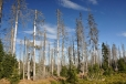 Musíme jít mrtvým lesem cestou necestou.
