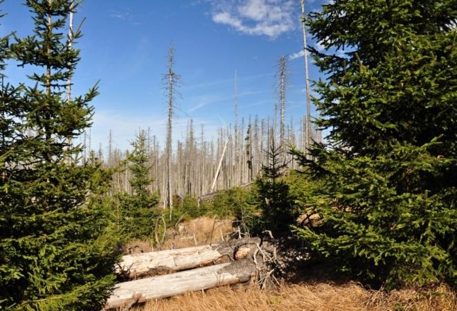 Často jsme museli překonávat tyto překážky, ale jít se dalo docela dobře. Většina stromů z lesa zmizela. Zůstaly ty v l. zónách.