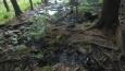 další zajímavost na piskovcové skoro planině, prameniště; voda odtékající ze skal se jmenuje Kamienny potok ...