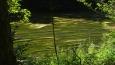 moc pěkně se řasy v řece vlnily . . .