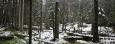 Bohužel již i tady kůrovec likviduje smrkové lesy, které převažují.