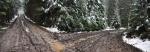 Důsledkem je toto! V podmáčeném terénu se těžká technika boří neskutečně hluboko, a zůstávají po ní rozježděné lesy a rozbité lesní cesty. Odmítáme pokračovat po bahnem zanesené cestě a opouštíme turistickou značku.
