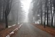 Za obcí Javorník cesta klesá ke Strašímu a my po ní jdeme k Měsíčnímu kamenu, prvnímu nedělnímu cíli.