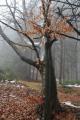 Mlha také pomůže dokonale odclonit pozadí a učinit fotky zajímavější a přehlednější.