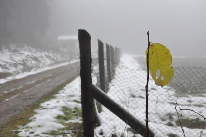 Nostalgie. Jako poslední Mohykán čeká tento list na příchod opravdové zimy. Ta na Javorník dorazí co nevidět.