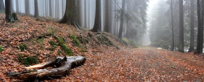 Stará lesní cesta je jen kousek nad asfaltkou a usnadňuje chůzi k Měsíčnímu kamenu.