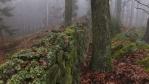 po mokrém listí a skalách je cesta dost o ústa ...