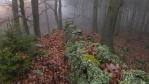 ticho, mlha, občas spadne kapka; pondělní polední romantika ...