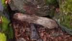 tohle je keška; pod kamenem a kusem dřeva je krabička, kam se zapisuje kdy a kdo kešku našel ...