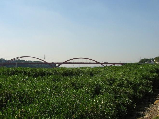 Řídce roztroušené mangrove směrem k mostu houstne, což jsem se zde snažil ještě zvýraznit.