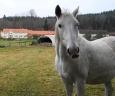 V Těšínově se na nás přišli podívat i tři krásní koně.