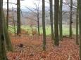 Louka pod lesem pokračuje až k Zelendárkám. Tam směřuje i odbočka naučné stezky stejného názvu.