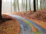 Lesní cesta do Všetče je dnes novou asfaltkou.