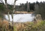 Rybník na Těšínovském potoce.