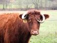 Tahle kravka se rozhodnout uměla. Sluší jí to, nemyslíte?