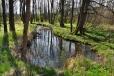 Třebovický potok má pod Velkým Plešným rozsáhlé a vydatné prameniště. Kousek níž po proudu se z něho stává Chvalšinský potok.