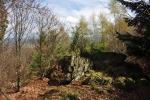 Z nižší skalky je zatím omezený výhled. I ten ale časem zakryjí vzrůstající stromy.