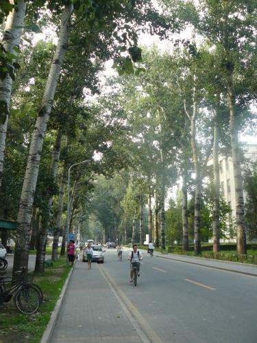 Ulice v areálu univerzity, po níž naštěstí jezdí jen málo aut.
