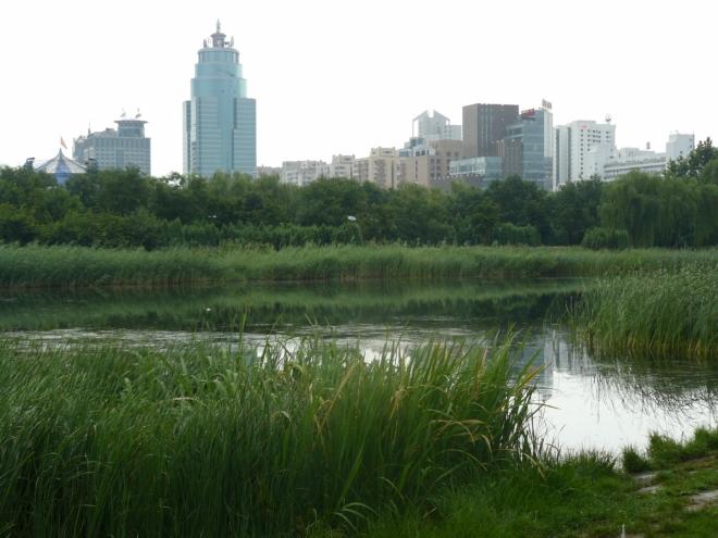 Zeleň ve velkoměstě.